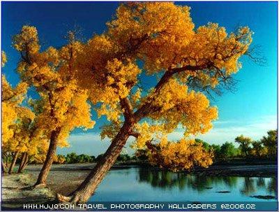 """秋日无限""""枫""""情二--寻找中国最美的秋天"""