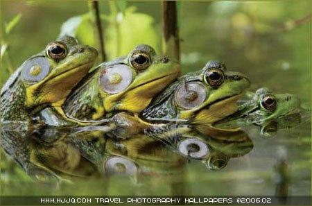圖文:《國家野生生物》獲獎作品-四隻青蛙