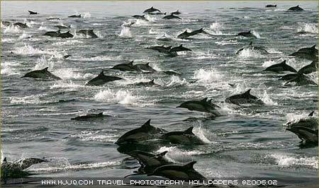 圖文:《國家野生生物》獲獎作品-海豚湧來