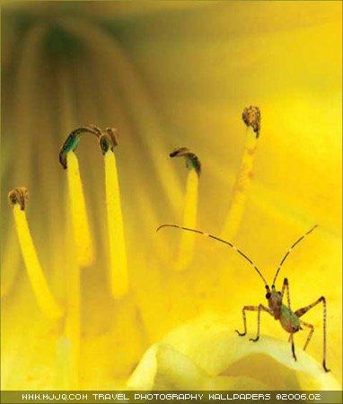 圖文:《國家野生生物》獲獎作品-樹螽戲花