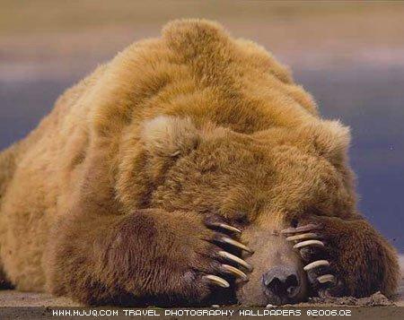 圖文:《國家野生生物》獲獎作品-熟睡的褐熊