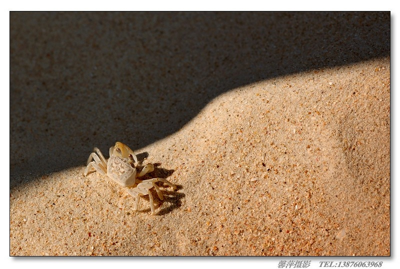 海南铜鼓岭国家级自然保护区风景图片