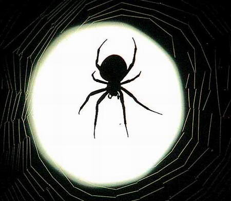 图文:蜘蛛在满月下的蛛网上等待食物的到来
