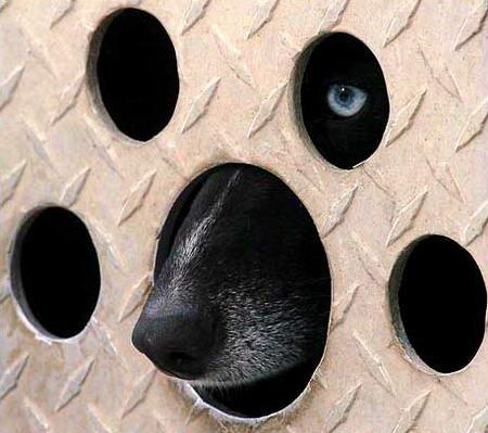 图文:狗从自己的窝里向外张望
