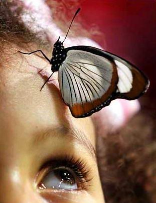 图文:儿童注视停在自己头上的蝴蝶