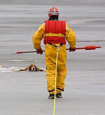 图文:救援人员准备营救一只险些掉入冰河的猎犬