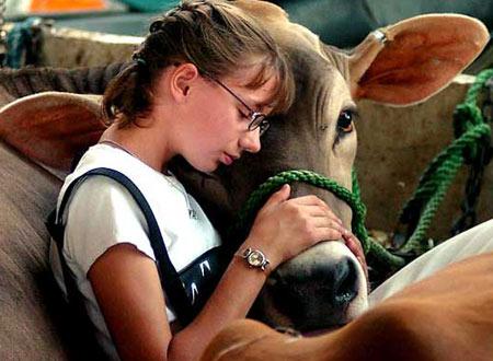 图文:女孩抚摸自家的小牛