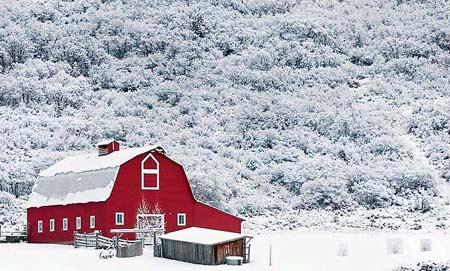 图文:红色的农舍被一片白色包围