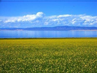 7月的青海湖_青海湖景点指南_乐途旅游网