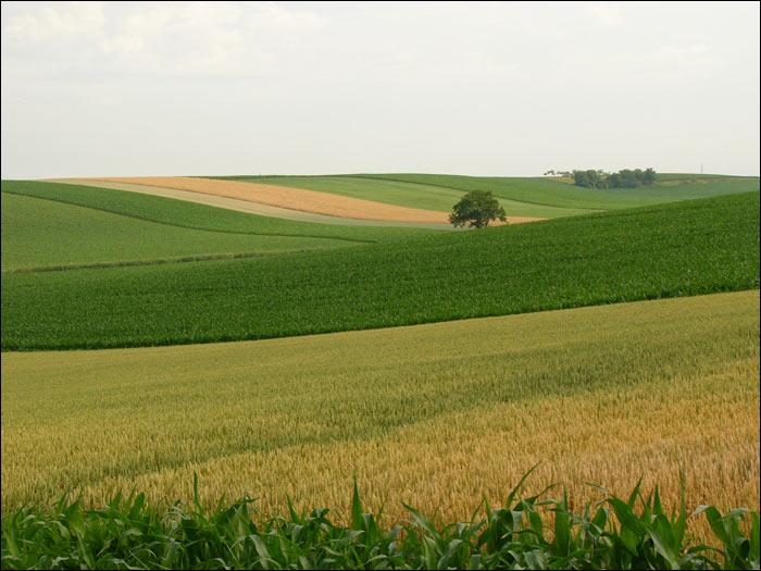 法国乡村田园风光