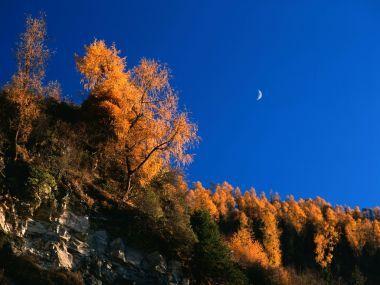 新疆秋天风光