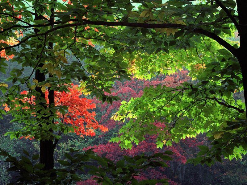 秋天风光-1