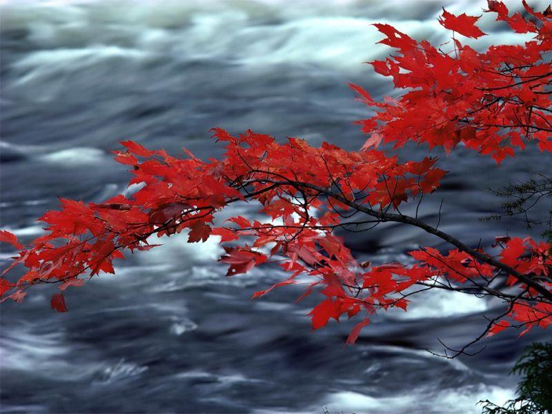 秋天风光-3