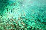 图片:犀牛海里的鱼和野鸭
