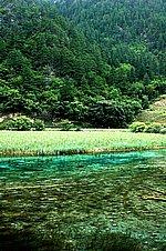 图片:九寨沟黄龙之旅 芦苇海风光