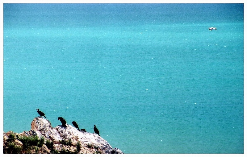 图片:青海-鸟岛