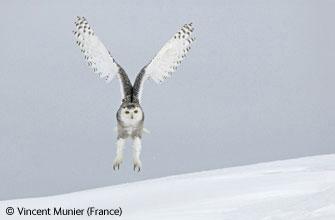 2006年度BBC野生动植物最佳图片