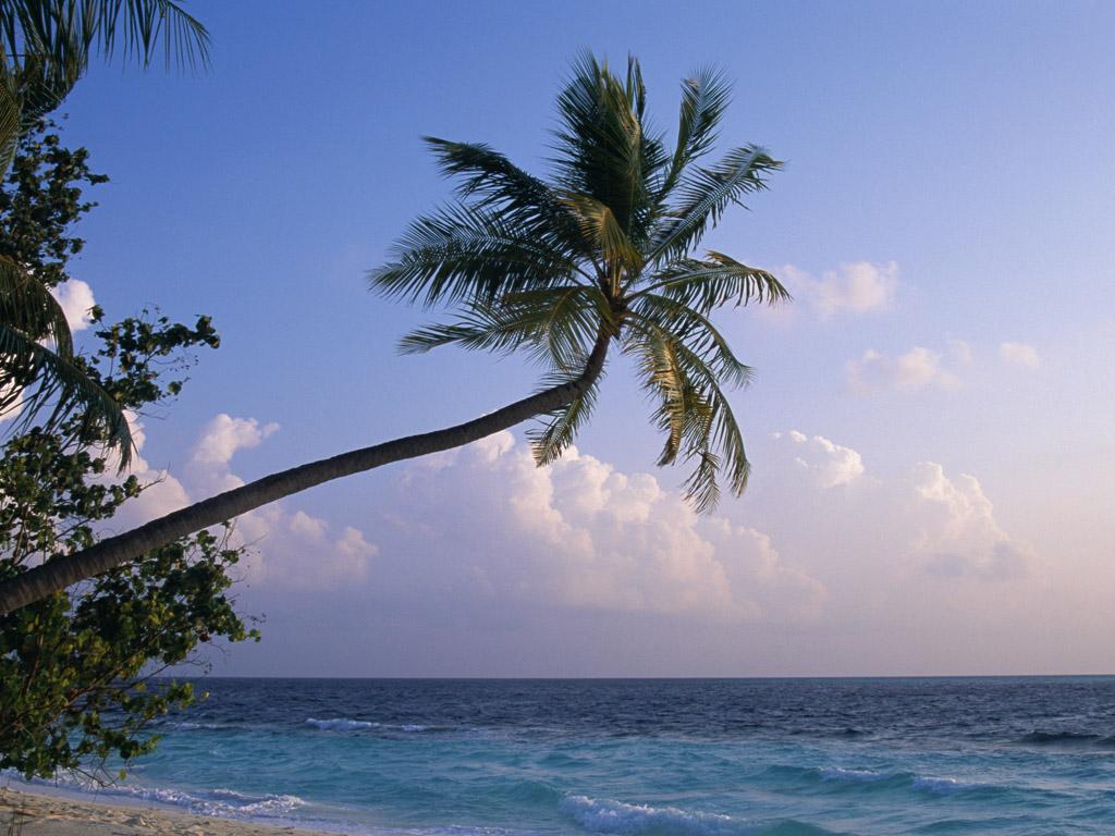 图片:马尔代夫