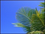 马尔代夫风景图片
