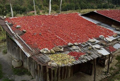 图片:不丹