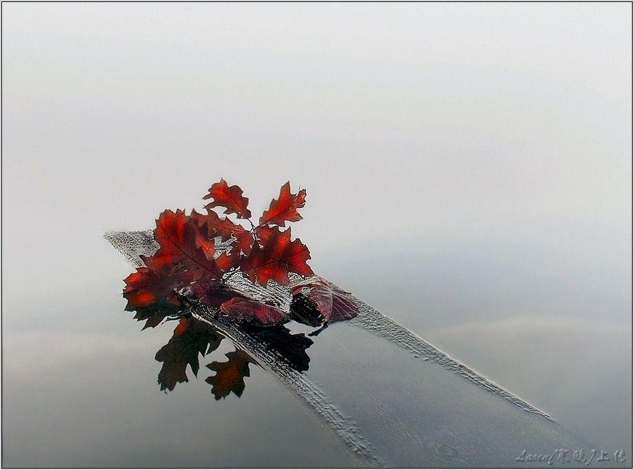摄影作品:视觉盛宴-动植物篇