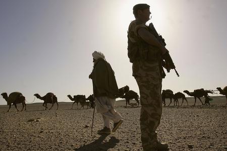 图文:阿富汗游牧人放牧骆驼群