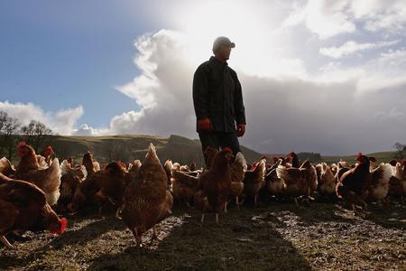 图文:苏格兰农夫站在自己饲养的家鸡中