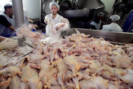 getty年度最佳:禽流感肆虐