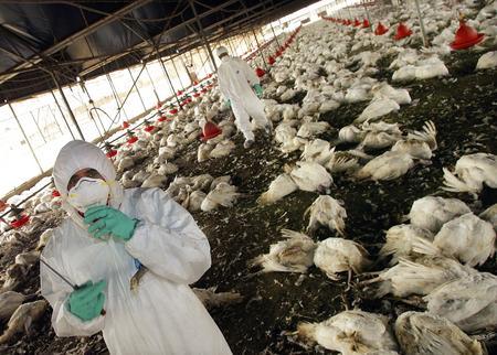 图文:以色列工作人员站在死亡的火鸡中间