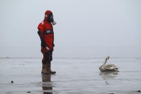 图文:防火潜水员找到一只死去的天鹅