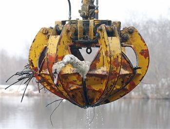 图文:天鹅在奥地利南部水电厂附近死亡