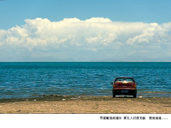 青海湖油菜花图片
