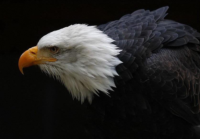 图片:国外优秀摄影作品-动物篇