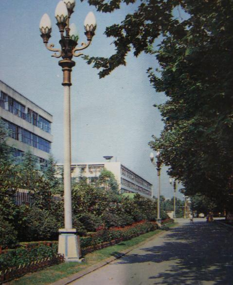 成都老照片-132厂的林荫路
