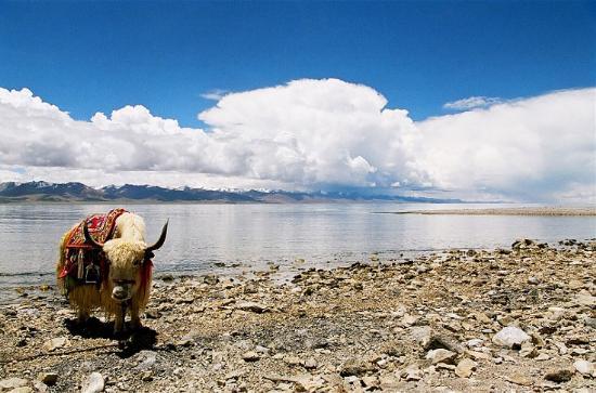 图片:西藏的三大圣湖-纳木错