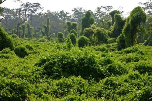 尼泊尔风光图片:奇达旺国家森林公园