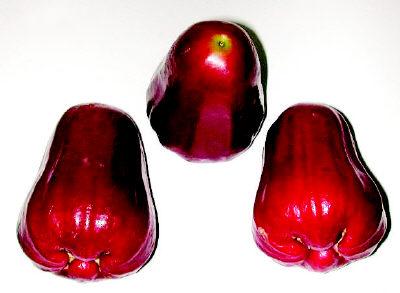 台湾特产水果-顶级黑珍珠莲雾