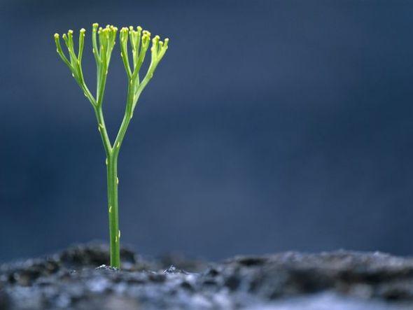 夏威夷熔岩中生长的蕨类植物