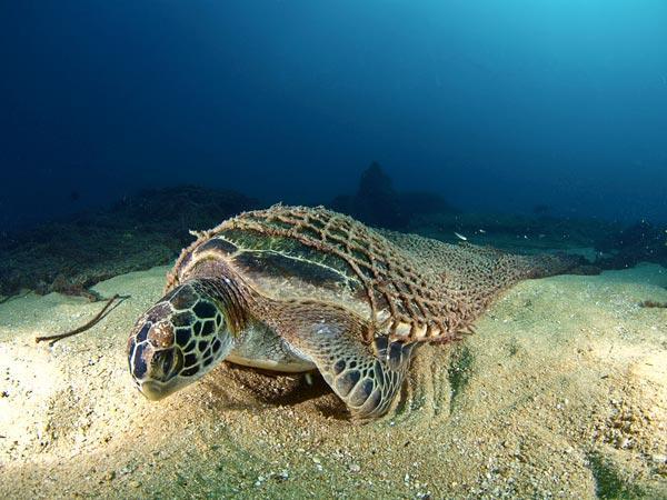 2010年最佳海底摄影照片:水下被困者