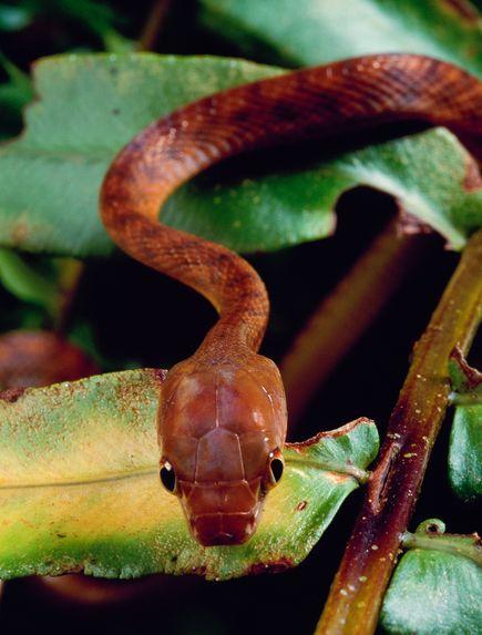 美国空投有毒死鼠灭蛇