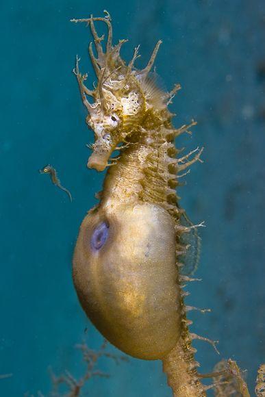 2010年最佳海底摄影照片:新生海马宝宝
