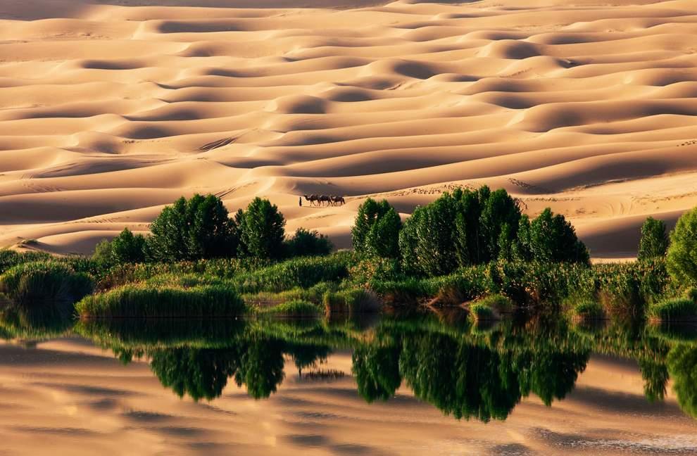 图片:2010年美国国家地理摄影大赛作品欣赏-沙漠绿洲