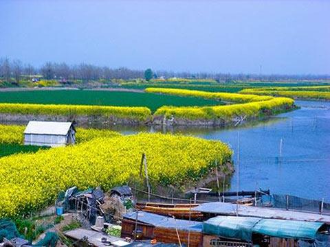 江南/图片:春天的江南乡间油菜花...