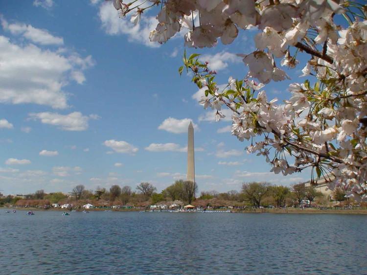 华盛顿樱花节