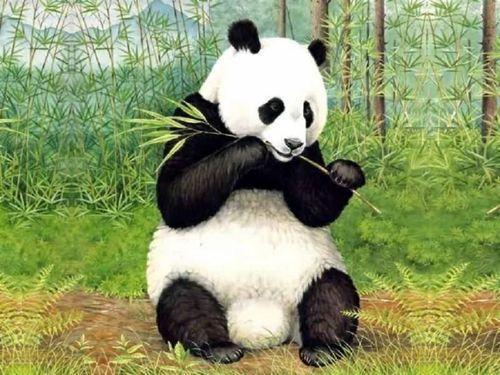 图片:去成都不可不做的八件事-大熊猫