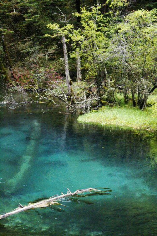 九寨沟图片欣赏:蓝色池塘