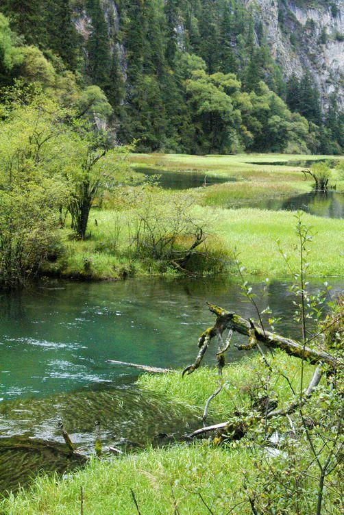 九寨沟图片欣赏:延伸的水草