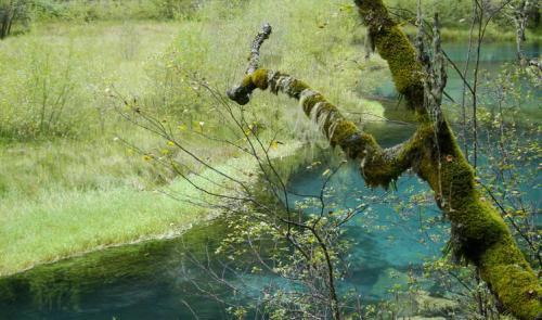 九寨沟图片欣赏:草树水的链接