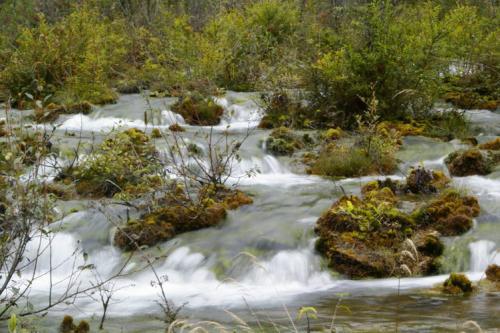 九寨沟图片欣赏:树正流水