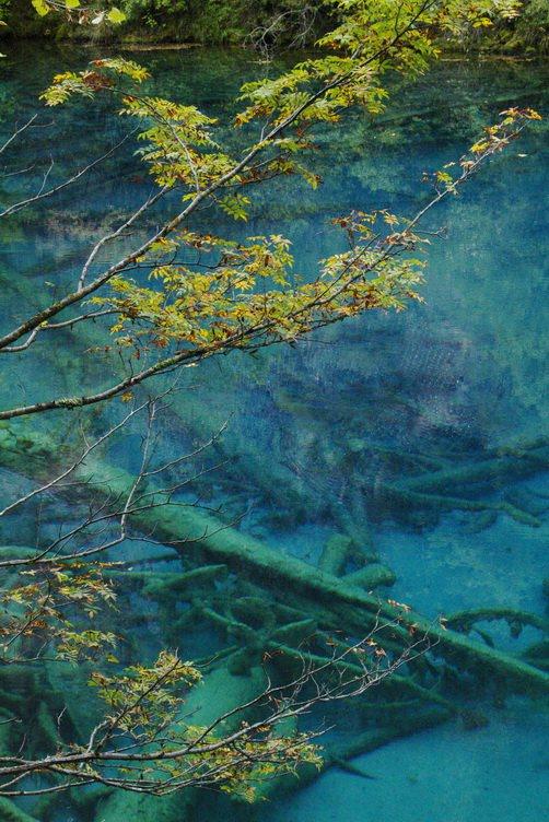 九寨沟图片欣赏:九寨水